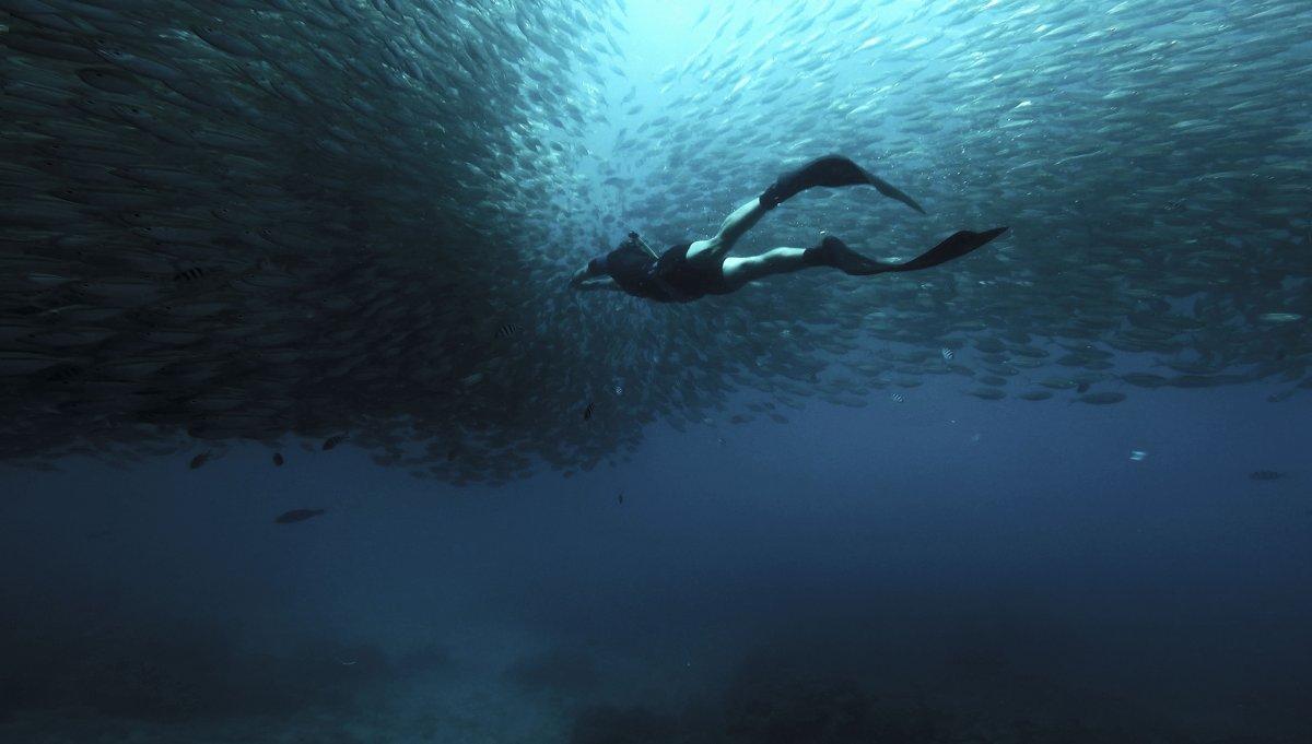 thaisko rybky